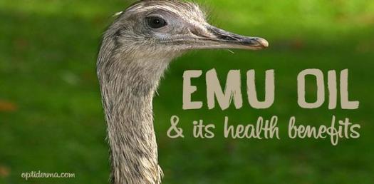 Emu Bird Trivia Quiz