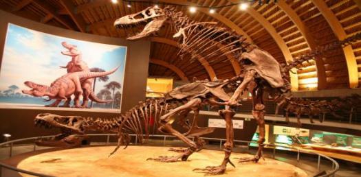 Paleobiology Trivia quiz