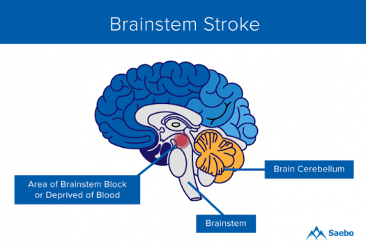 Test Your Knowledge About Brainstem!