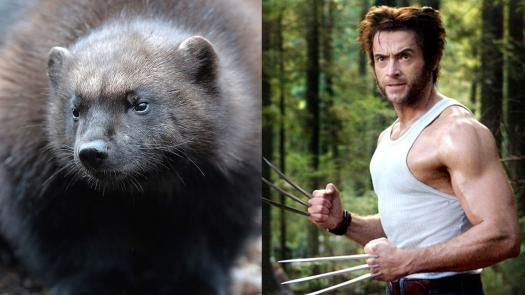 A Quiz On Famous Wolverine Characters