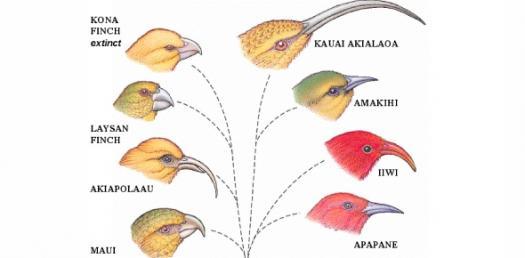 Mechanisms Of Speciation