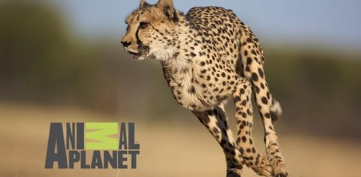 Can We Guess Which Animal Planet Show Is Your Favorite?