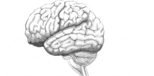 The Ultimate Quiz On Cerebellum - ProProfs Quiz