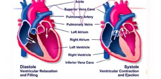 Test Your Knowledge About The Cardiac Cycle