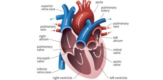Test How Deep Your Knowledge Is On Brain Ventricles
