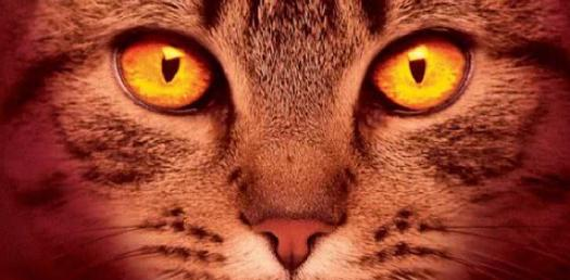 Quiz: Which Warrior Cat Are You?