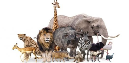 Which Endangered Animal Are You?