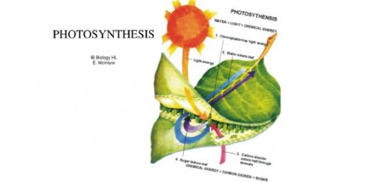 Honors Biology Photosynthesis Quiz