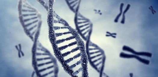 Simple Genetics Quiz!