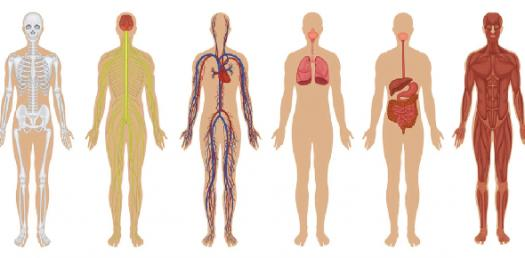 Planes And Directions Of The Human Body - ProProfs Quiz