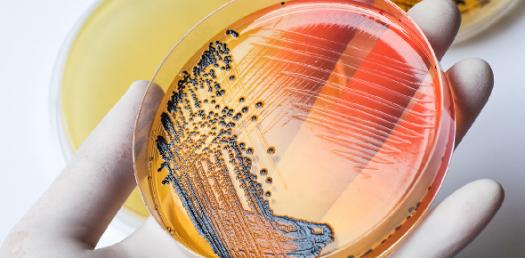 Can You Pass This Toughest Microbiology Test? Quiz