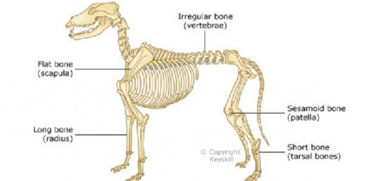 Bone Quizzes Online, Trivia, Questions & Answers - ProProfs