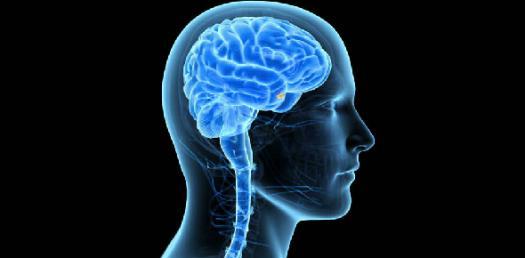 Brain And Behavior Exam 4