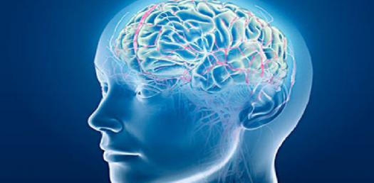 Brain And Behavior - Language