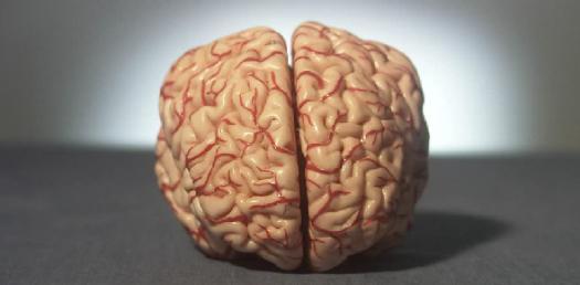 Brain And Behavior Exam 2