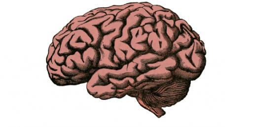 Bio 130 Brain Identification