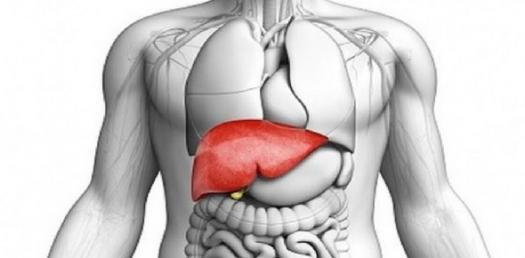 The Power Of The Liver: What Does The Liver Do?