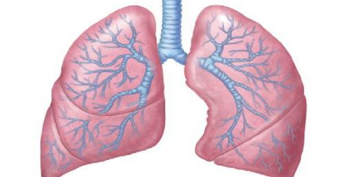 Superior Mediastinum And Lungs - Block 3