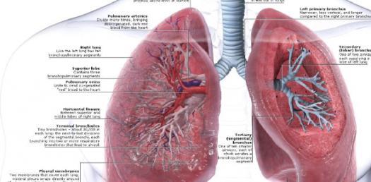 Mcq_mini3 Superior Mediastinum And Lungs