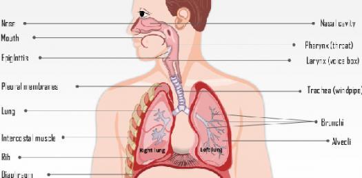 Respiratory System   Asthma & COPD NCLEX Quiz 32