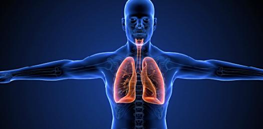 Chapter 38 - Respiratory System
