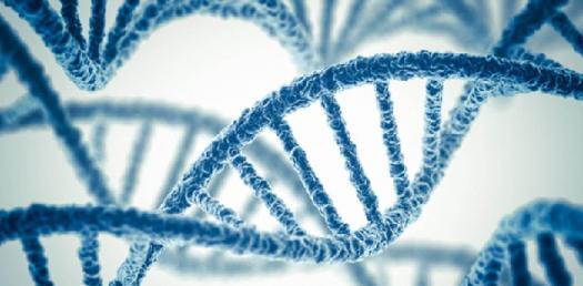 Genetics Basic Questions! Quiz