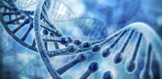 7.4 Human Genetics And Pedigree Charts