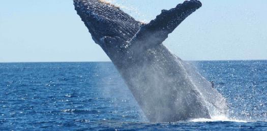 How Much Do You Like Ocean? Ocean Quiz!