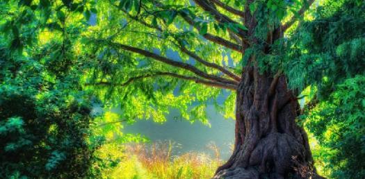 Quiz Your Nature Knowledge