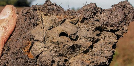 What I Know About Soil