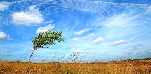 Wind Power Quiz