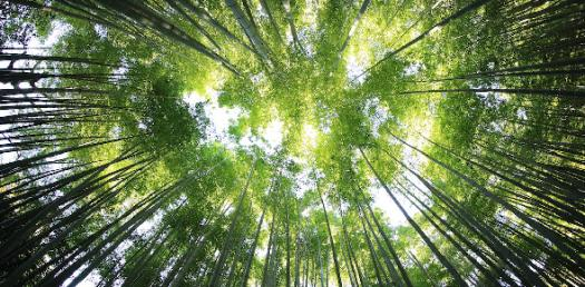 Harsh Environments - Vocab Quiz