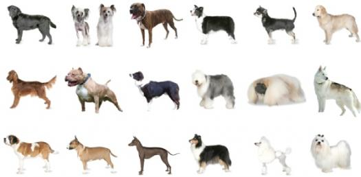 A Short Dog Quiz! What Dog Are You?