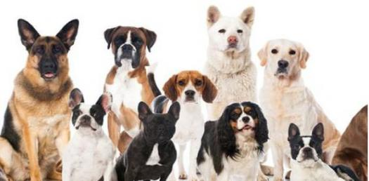 Which Breed Of Dog You Were In A Past Life? Play This Quiz To Know!