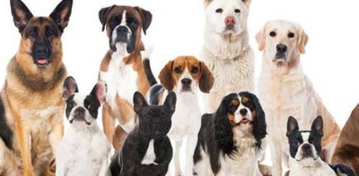 Which Celebrity Dog Are You?