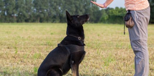 How Much Do You Know About Assistance Dogs And Etiquette?