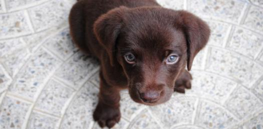 What Dog Breed Is Right For You?