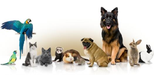 Pets And What They Do!