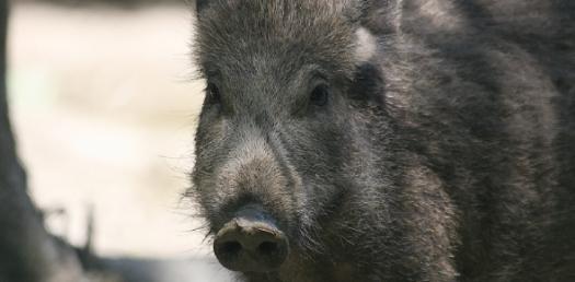 Guinea Pig Quiz 2