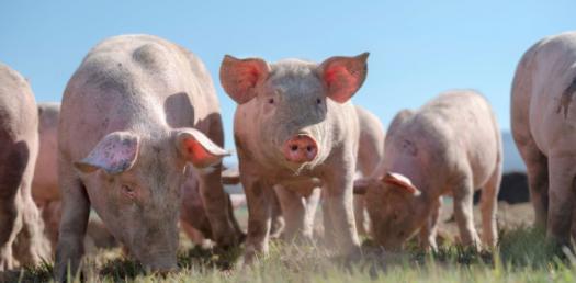Bay Of Pigs Invasion Quiz
