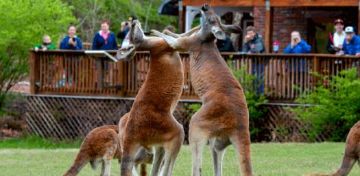 Which Zoo Personality Quiz Should You Take