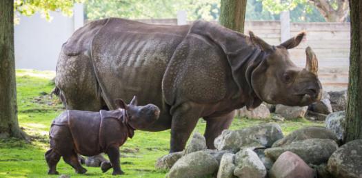 Zoo Regions - ProProfs Quiz