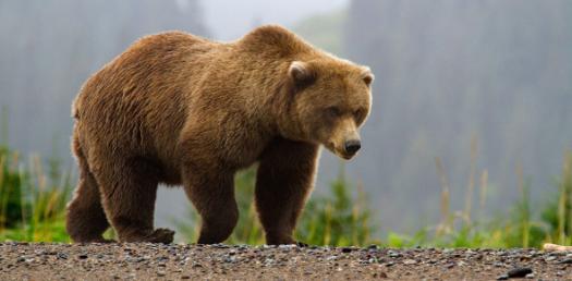 Gummy Bear Job Quiz :D