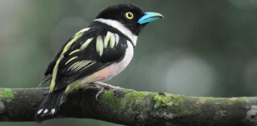 Trivia Quiz About Birds