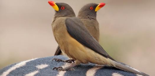 Quiz Identify Order Bird 2