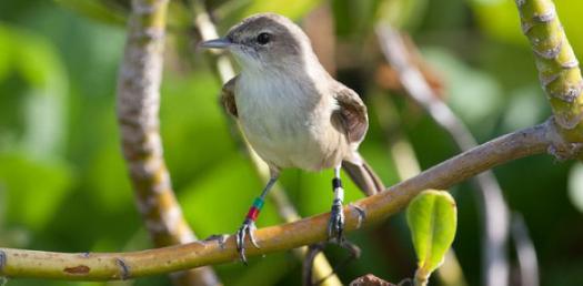 Bio 100 Bird Exam