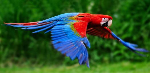 Bio 100 Bird Call Exam