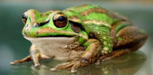 Learn About Life Cycle Of A Frog