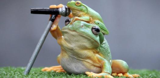 What Frog Are You? Fun Quiz