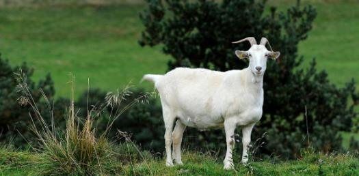 Your Traffic Goat Personality Quiz